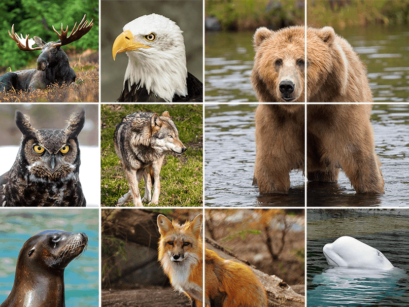 Photo collage of wildlife at bear trail lodge